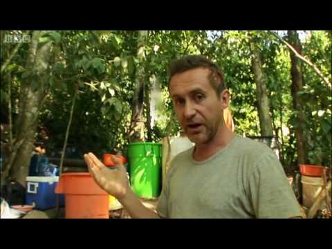 Making cocaine in the Amazon - Bruce Parry - BBC 2