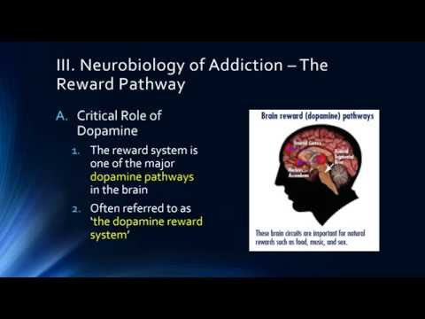 Epidemiology and Neurobiology of Addiction 2