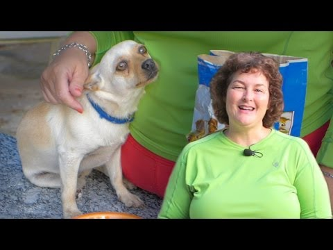 Deworming Dogs Naturally: Prevent Roundworms & Tapeworms in Dogs 2