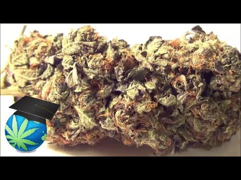 How To Tell Quality of Weed VISUALLY (CLIP ONLY) 2