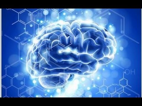 How Ayahuasca (DMT) Affects the Inner Workings of the Brain Explained 2
