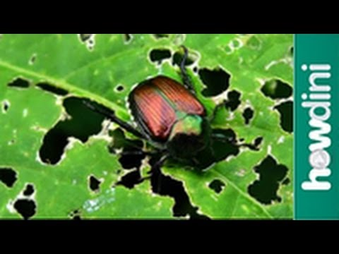 Organic pest control - Natural bug and insect repellents 2