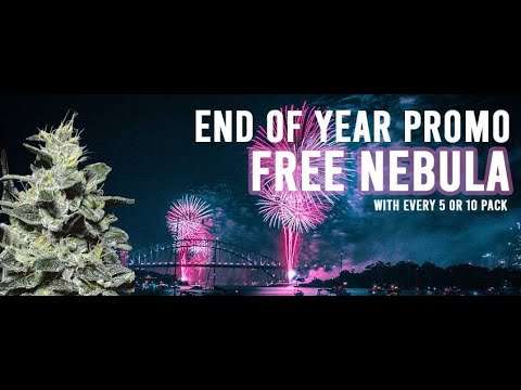 Paradise Seeds | Feminized Cannabis Seeds | End Of Year Promo | Free Nebula Seeds 2