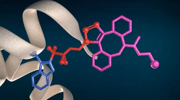 New technology CF LINK for protein bioconjugation and structural proteomics 2